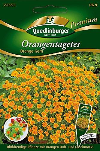 Orangen-Tagetes Orange von Quedlinburger Saatgut