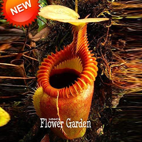 Neue Frische Samen 50 Samen/Lot Nepenthes Samen Fliegenfalle Balkon Topf Bonsai Pflanzen Samen Bonsai Fleischfressende Pflanzen, Ub8Hwf