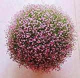 Charm4you Planta Maceta Semillas,Fort-Season Seasons Semillas de Plantas fáciles de Vivir-Mint_500 cápsulas,Raras Semillas de césped