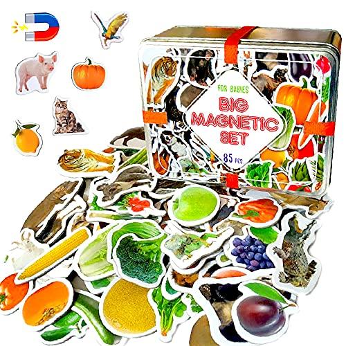 MAGDUM 85 Fotos Set Animales&Frutas&Verduras en Caja de Lata de Regalo-imanes de bebé Realistas-85 Grandes Juguetes de imán...