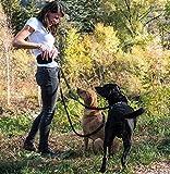 Joggingleine für Hunde mit extra hoher Spannkraft für Belastungen bis 100kg und dehnbar von 120 bis 220cm | stoßdämpfend und reflektierend | von Happilax - 9