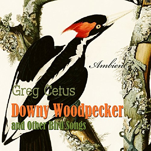 Downy Woodpecker and Other Bird Songs audiobook cover art