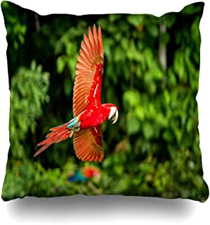 Ahawoso Throw Pillow Cover Pillowcase Square 16x16 Red Tree Parrot Ara Flight Macaw Flying Blue Pet Green Animals Beautiful Wildlife Bird Nature Wing Decorative Cushion Case Home Decor Pillowslip