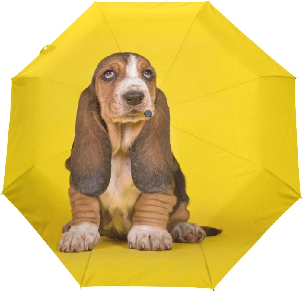 Discount mail order My Daily Basset Hound Puppy It is very popular Dog Auto Open Travel Close Umbrella