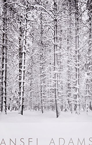 Pine Forest in Snow, Yosemite National Park, California, 1932