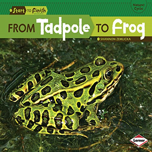 From Tadpole to Frog copertina
