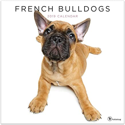 2019 French Bulldogs Wall Calendar