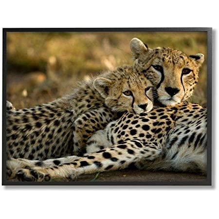 Photo Poster Print Art * All Sizes AFFECTIONATE CHEETAHS Animal Poster 3767