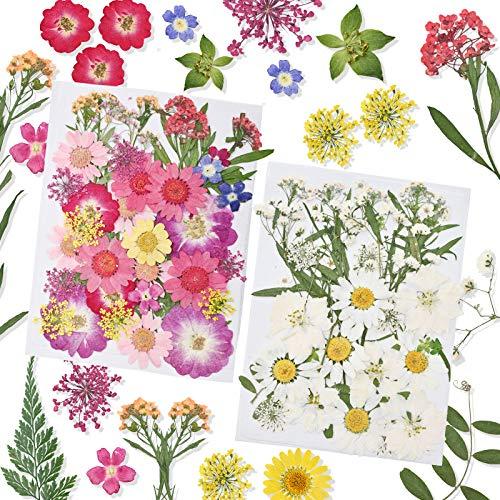 Flores Secas Manualidades Pequeñas flores secas  Marca Pesonlook