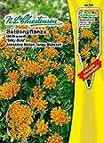 Seidenpflanze 'Silky Gold' goldorange attraktive Blüten, lange Blütezeit 'Asclepias curassavica'