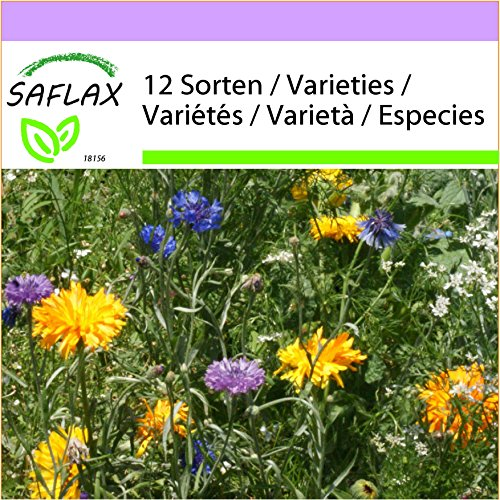SAFLAX - Estampitas comestibles - 1000 semillas - 12 Wildflower Mix