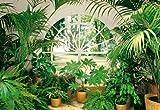Fototapete 'Wintergarten', Topfpflanzen, Pflanzen im Zimmer mit Aussicht in einen Garten, Park, 366 x 254 cm, 8-teilig, grün, green, Botanik, Palmen, Querformat, gestochen scharfe...