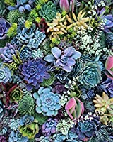 5D Diamond Painting Mosaic DIY Colorful succulents Cross Stitch Diamond Embroidery Beads Picture Arts Craft for Home Gift Full Drill-Circular Drill 40x50cm