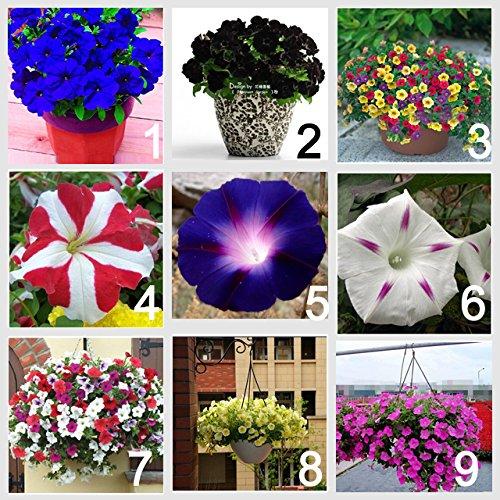 9 couleurs 450 graines Petunia (50 graines chaque couleur), Mix Garden Petunia Shuttlecock Fleur Corne Bonsai Fleur de graine 450 graines / sac