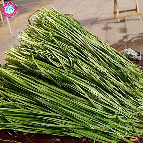 11.11 Big Promotion! 100 pcs/lot de graines de poireau semences de légumes vert chinois jardin et la maison plante herbacée organique
