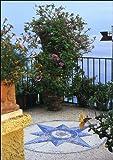 Zoom IMG-2 il giardino in balconi e