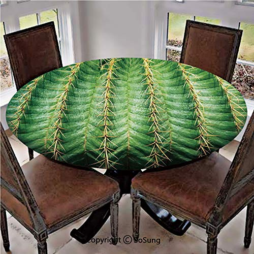 "Elastic Edged Polyester Fitted Table Cover,Photo of Cactus with Spikes Plant Flower Fruit from Close Zoom Shoot with Spikes,Fits up 40""-44"" Diameter Tables,The Ultimate Protection for Your Table,Green"