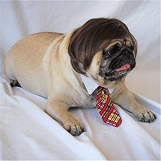 Best pets with wigs Reviews