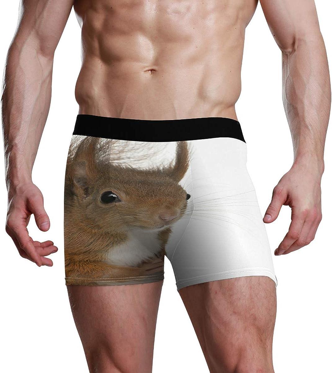Mens Boxer Briefs Eurasian Red Squirrel Cute Sciurus Vulgaris Low Rise Trunks Underwear Breathable Bikini Boys