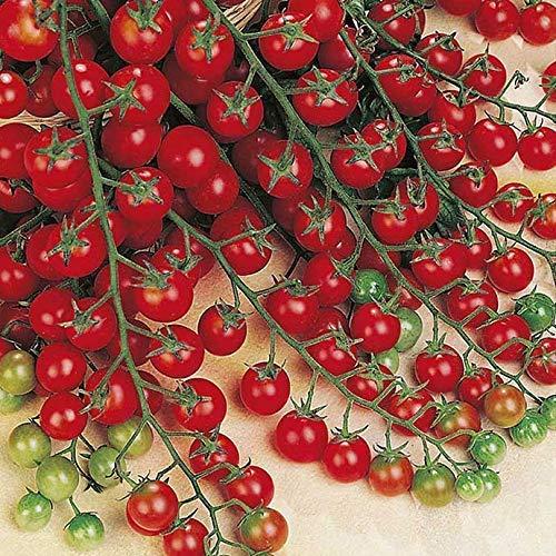 Cherry-Tomate - Tomate Sweet Million F1 - sehr süß und ertragreich - 20 Samen
