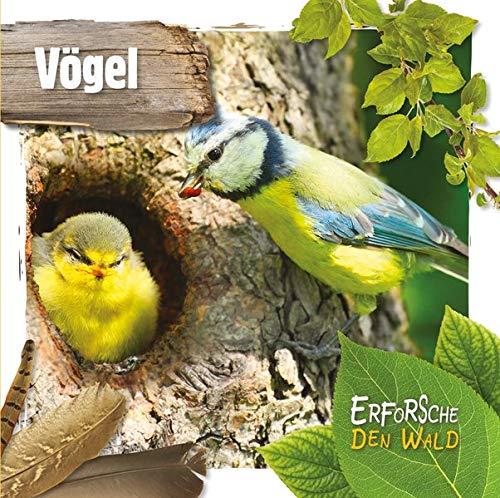 Vögel: Erforsche den Wald