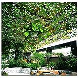 JUNWEN Camo Netting 2x3m Toldos para Patios Sun Shade Shade Red Roll For Plants Roll Jardín Camping Army Fotografía Hunt Shooting Garden Balcony Privacidad Decoración SHAD 1.5m 2m 4m 5m 6m   Código de