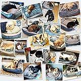 Zoom IMG-1 docatgo letto per cani 80x60x25cm