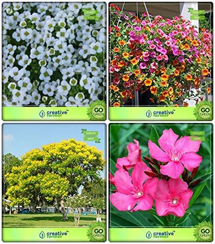 BloomGreen Co. Seeds Combo Baumsamen: Peltophorum, Nerium, süßen Alyssum, Phlox Twinkle Mix Blumensamen Küche Garten-Pack