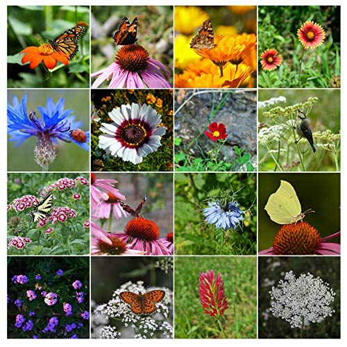 18cd34d560917 500 Butterfly Attracting Flower Mix Seeds With 25 Different Types of Flower  by RDR Seeds