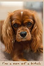 I'm a Son of a Bitch: Blanked Lined Journal (Cavalier King Charles Spaniel Journal Series)