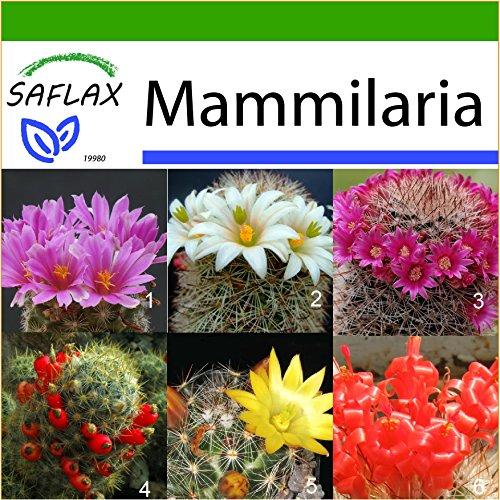 SAFLAX - Kakteen - Mammilaria Mischung - 40 Samen - Mit keimfreiem Anzuchtsubstrat - Mammilaria Mix