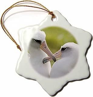 3dRose ORN_89882_1 Nw Hawaiian Islands, Laysan Albatross Bird-Us12 Rja0026-Rebecca Jackrel-Snowflake Ornament, 3-Inch, Porcelain