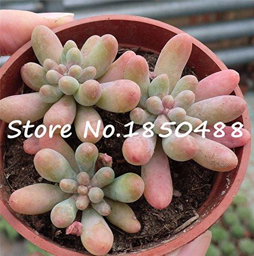 100 Graines 5 types Cymbidium chinois Graines semences Bonsai Flower Garden Orchid Semente Fleurs décoratives rares