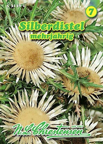 Carlina aucaulis, Silberdistel silberweiß N.L.Chrestensen Samen 531391-B