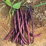 50 Piezas Semillas De Judías Verdes Variedades Especiales De Color Púrpura Verduras Verdes Para Plantar Jardines Fácil De Cultivar Adecuado Para Jardinería Doméstica