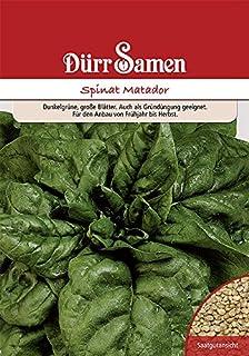 Dürr Samen - Gründüngung Spinat Matador, 1kg