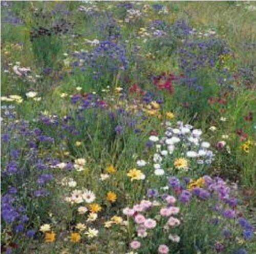Suffolk herbes g?n?rations Lot???Fleurs sauvages???Champ et Hedgerow Graines de fleurs ?
