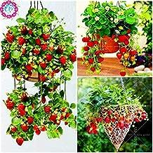 ShopMeeko Seeds:300pcs/bag Hanging Basket Strawberry, Rare, Big as a Peach, Fragaria ananassa Bonsai Pot Fruit for Home Garden Plant