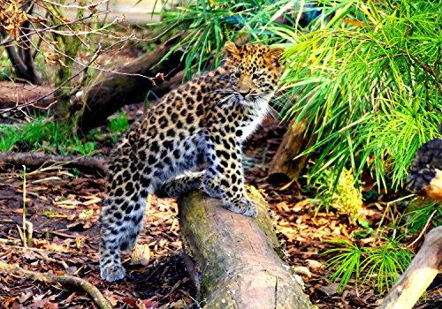 wandmotiv24 Fototapete Kleiner Leopard S 200 x 140cm - 4 Teile Fototapeten, Wandbild, Motivtapeten, Vlies-Tapeten Wild-tier, Dschungel, Wildnis M1060
