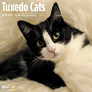 2020 Tuxedo Cats Wall Calendars by Bright Day Calendars 16 Month Wall Calendars 12 x 12 inches Kitten Calendar