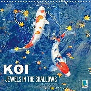 Koi Jewels In The Shallows 2016: Kois - Beautiful Status Symbols
