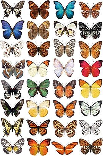 Stickers4 Schmetterling Fensteraufkleber zum Schutz vor Vogelschlag - 32 schöne Schmetterling Glassticker, doppelseitig und selbstklebend zum Schutz vor Vogelkollisionen