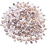 Mini Natural Ocean Sea Shells, mixed