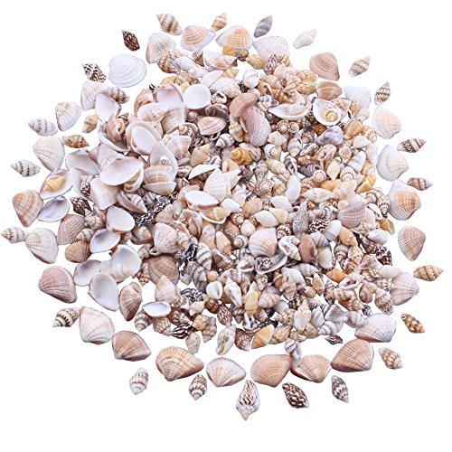 Mini Tiny Natural Mixed Ocean Sea Shells Variety Beach Decor Crafts Aquarium Scrapbook Candle Miniature Decoration (Style B)
