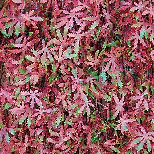 tenax Siepe Artificiale con Foglie Traliccio Estensibile in salice, Divy 3D X-Tens Red Acer, 1x2 m, Rosso/Verde