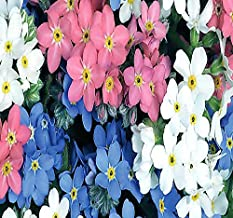 BIG PACK - (50,000) MIXED Pink, Blue, White FRENCH FORGET ME NOT, Myosotis sylvatica Flower Seeds - PERENNIAL ZONE 3-9 By MySeeds.Co (French MIXED Forget Me Not - 50,000 Seeds)