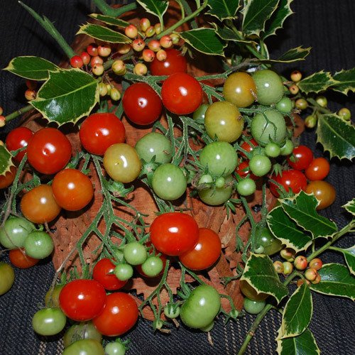 Plant World Seeds - Christmas Grapes Seeds