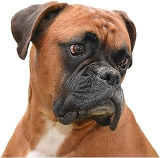 NUEVO Collar de perro boxer – Tamaño Grande – 40 cm a 50 cm/15