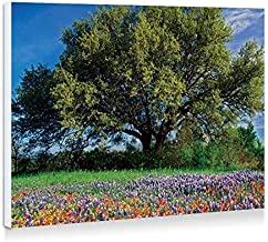 Life Oak In Texas Paintbrush And Bluebonnets - Art Print Wall Art Frameless Decorative Painting - Ready To Hang