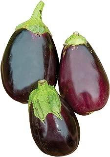 Burpee Black Beauty Eggplant Seeds 100 seeds